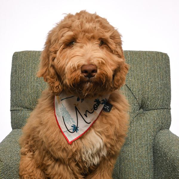 Community Pet Therapist